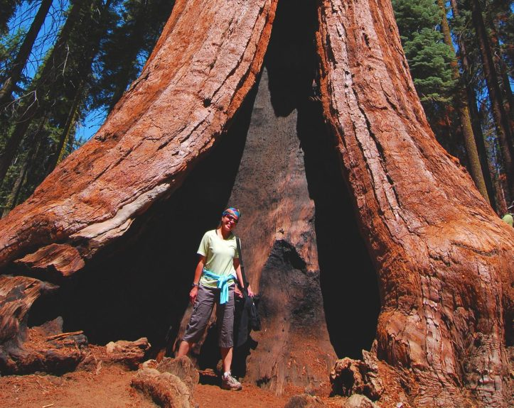 cropped-1gianttreesequoia.jpg