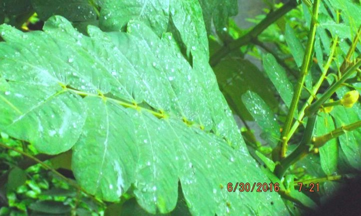 cropped-rain.jpg